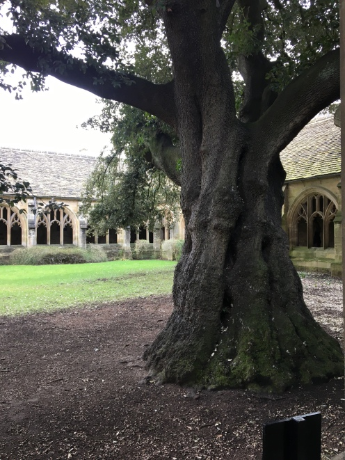New College - 200 y/o tree